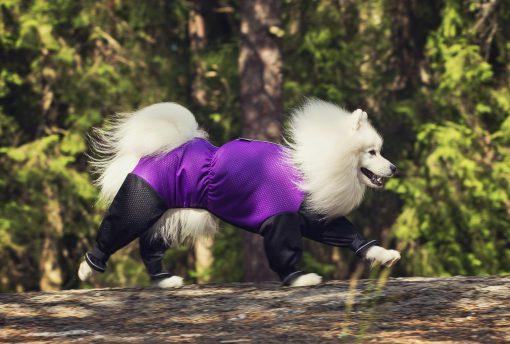 Metsähaalari violetti 1