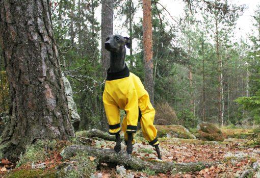 Sadehaalari keltainen